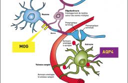 Pathologies du spectre NMO
